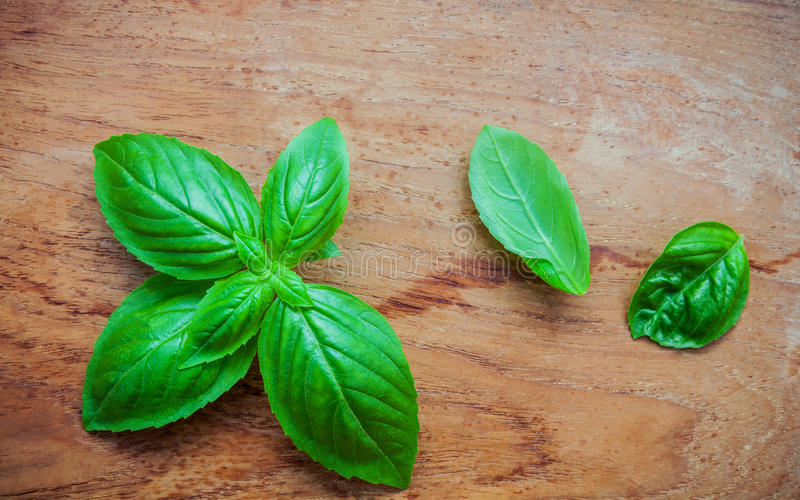 Fresh sweet basil leaves on shabby teak wood background. Sweet b. Asil leafs with flat lay. Food ingredients and seasoning wooden background with copy space royalty free stock photography