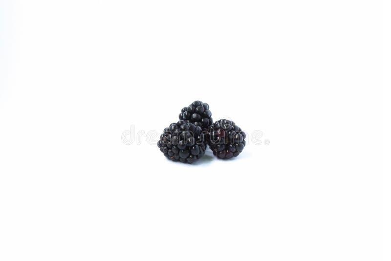 Fresh Sweet Blackberry on white royalty free stock photos