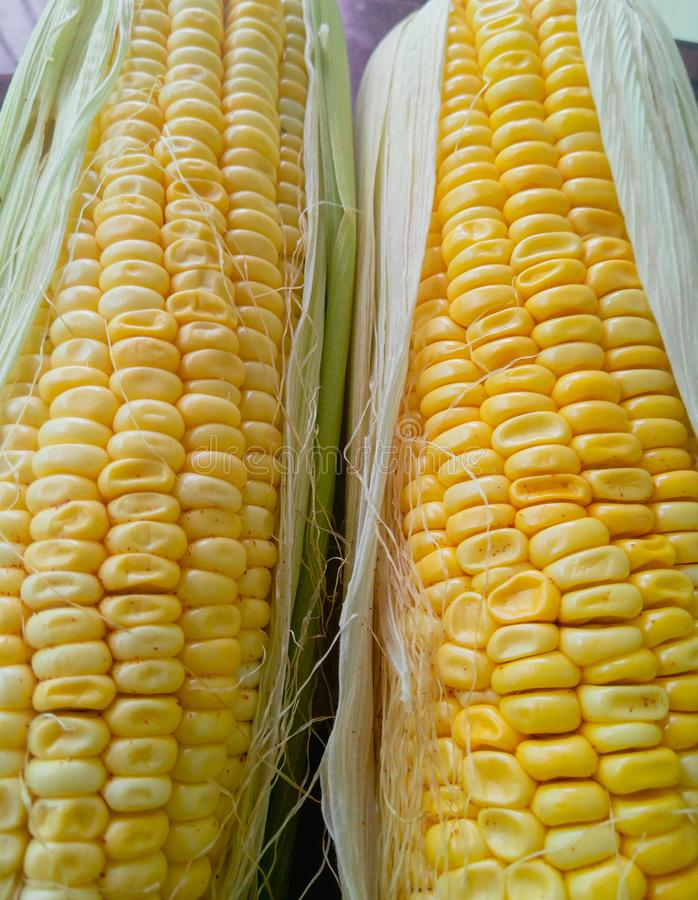 Fresh sweet corns, Food ingredients, raw, nutritious and healthy eating lifestyles, food photography stock image
