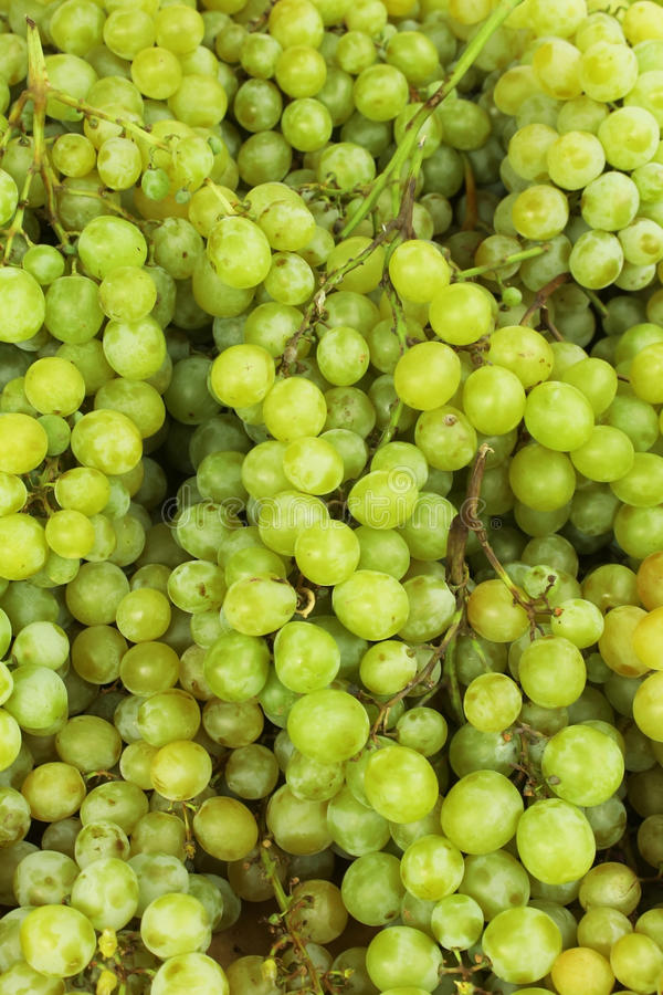 Fresh sweet green grapes stock photo