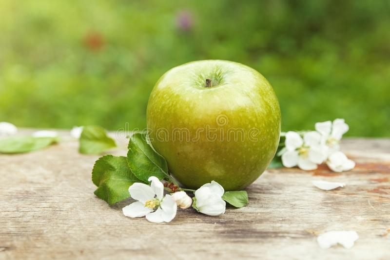 Fresh sweet juicy spring green apple with flowers stock image