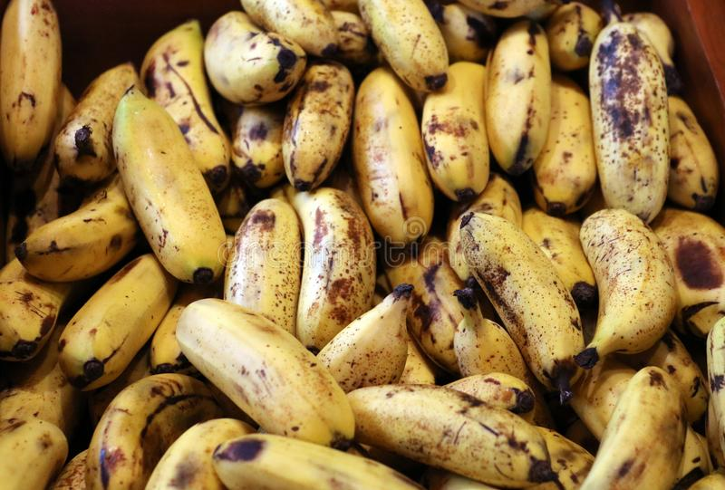 Fresh sweet plantains fried for breakfast. In Costa Rica stock photos