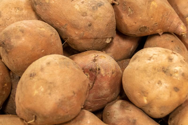 Fresh sweet potato on a market, Group of asterix potatoes. Fresh sweet potato on a market. Group of asterix potatoes stock images