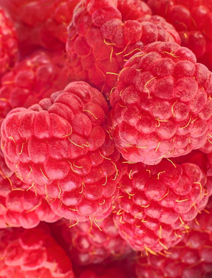 Fresh and sweet raspberries background. Big great ripe raspberries stock photography