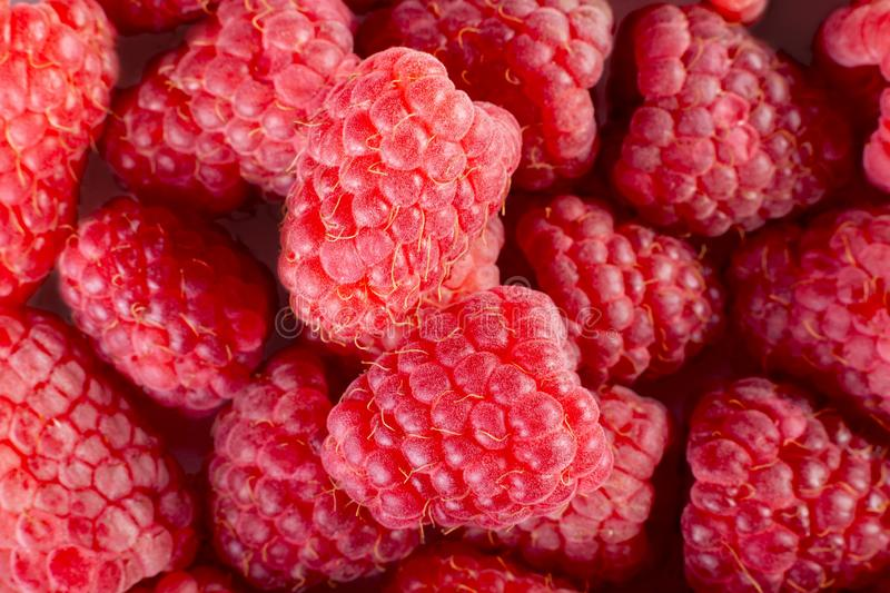 Fresh and sweet raspberries background. Two big berry - fruit background collection royalty free stock images