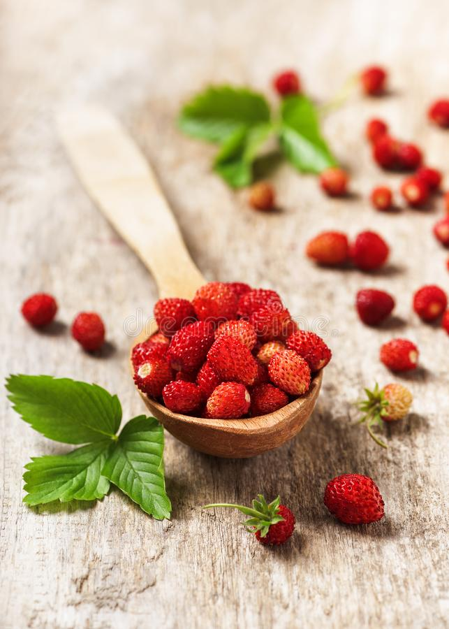 Fresh sweet wild strawberries in a wooden spoon. royalty free stock image