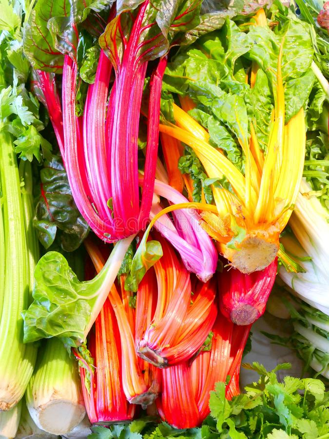 Fresh swiss rainbow chard. With leafes stock photography