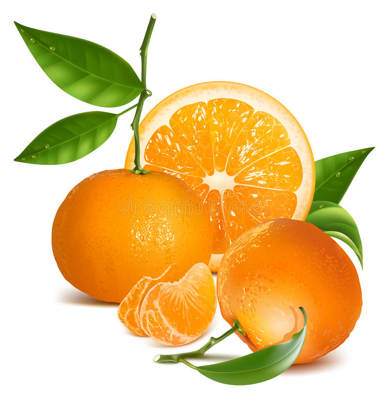 Fresh tangerines with green leaves and orange. Photo-realistic vector illustration. Fresh tangerine fruits and orange with green leaves and slices royalty free illustration