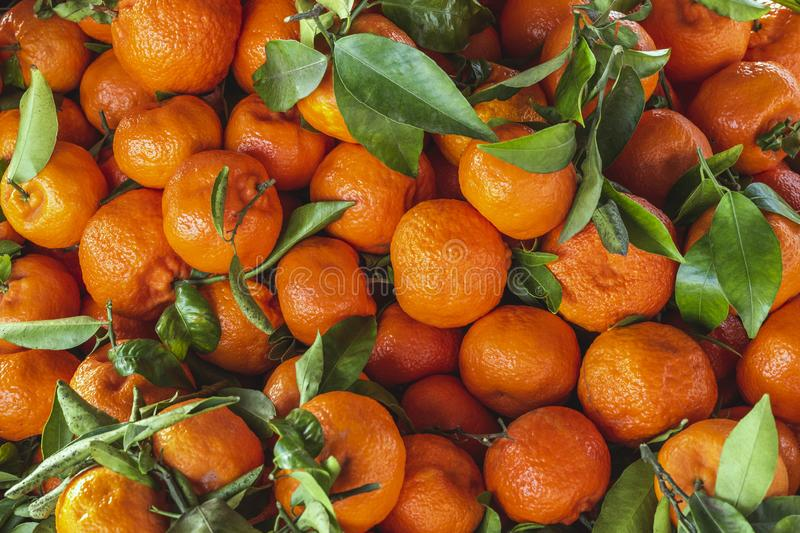 Fresh tangerines with leafs on market stall at weekly spanish marketplace. Food background close up shot with selective focus.  stock image