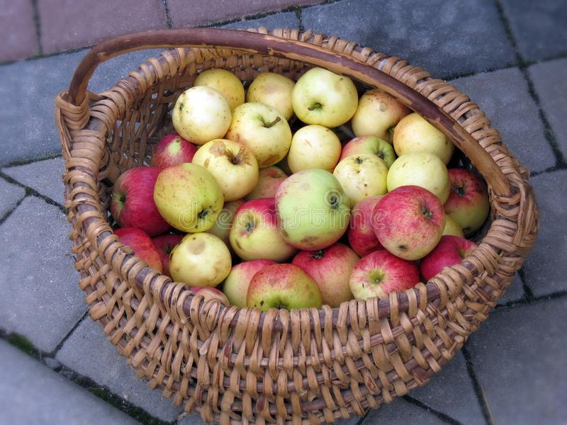 Fresh tasty apples in basket royalty free stock images