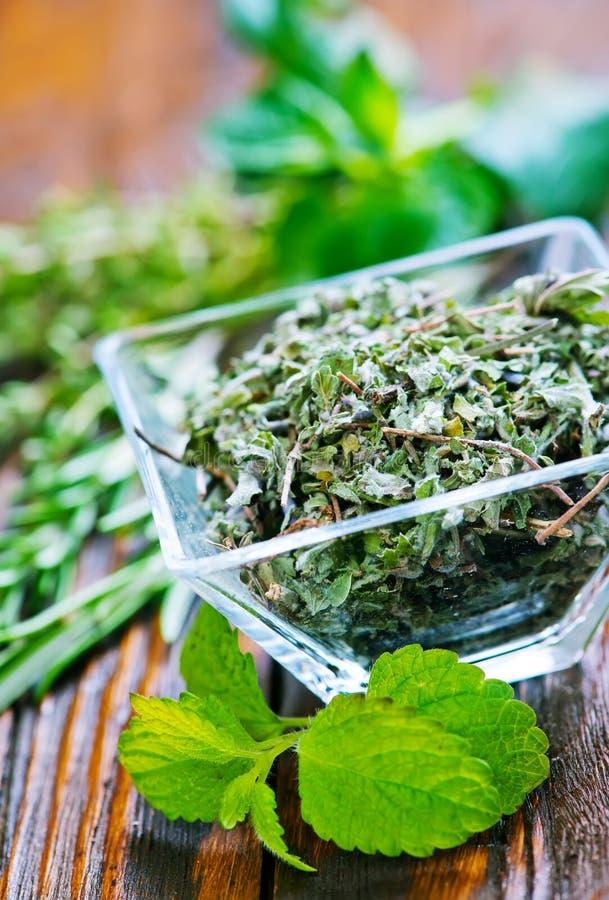 Fresh tea. Fresh aroma tea in glass bowl and on a table stock photos
