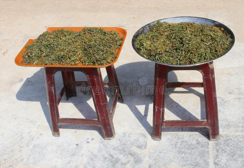 Fresh tea leaves drying sun outdoor street, Hoi An. Fresh harvested tea leaves are drying in the sun in outdoor ancient street of Hoi An, Vietnam royalty free stock photos