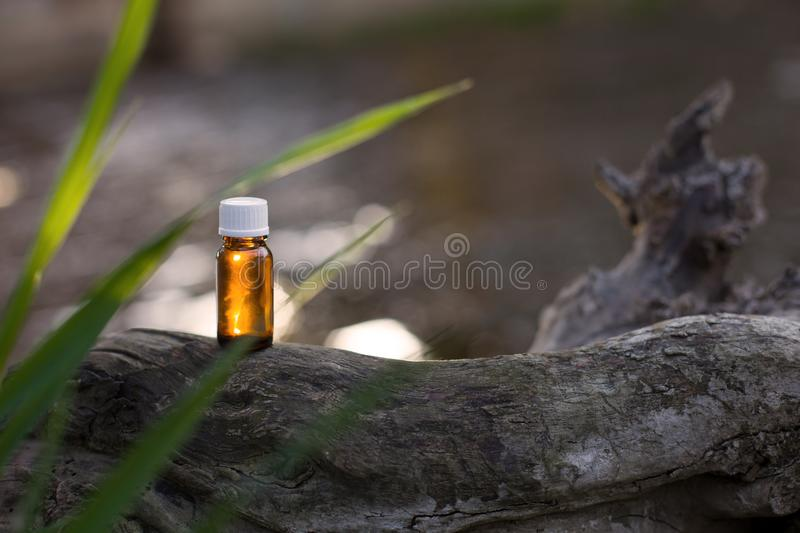 Fresh tea tree and essential oil. royalty free stock photos