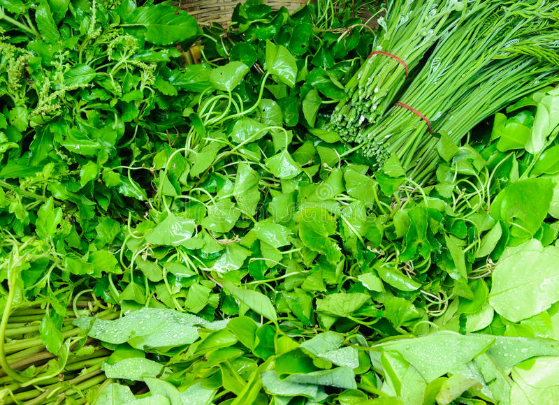 Download Fresh thai vegetable stock image. Image of agriculture - 26593729