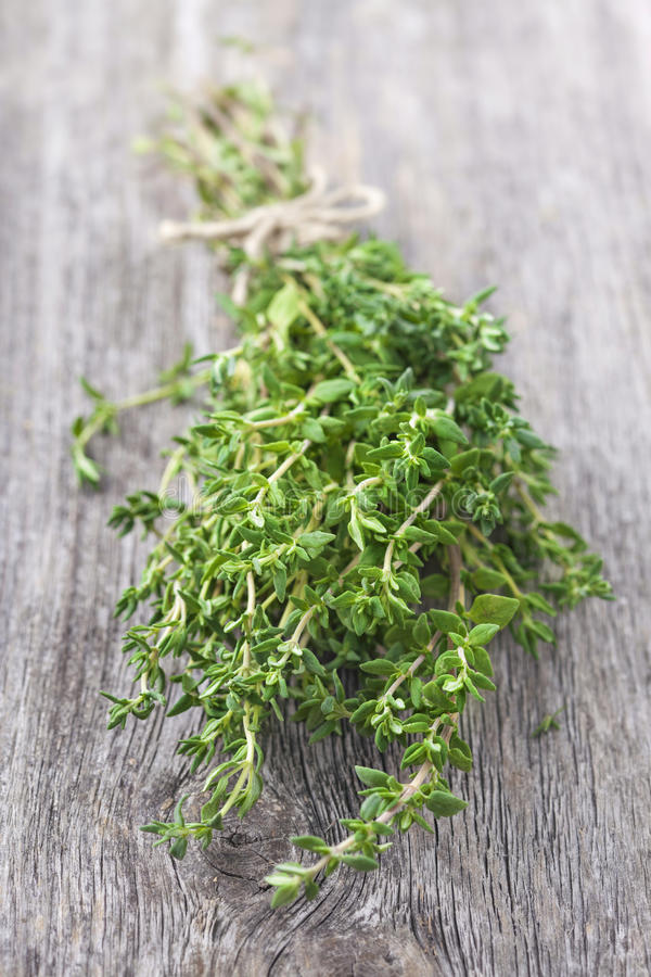 Fresh thyme royalty free stock photo