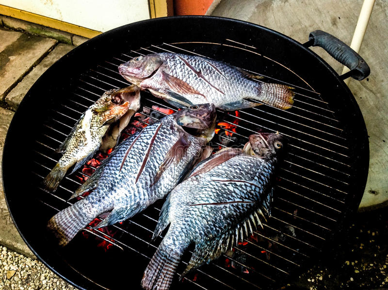 Fresh Tilapia Fish on the Grill stock photos