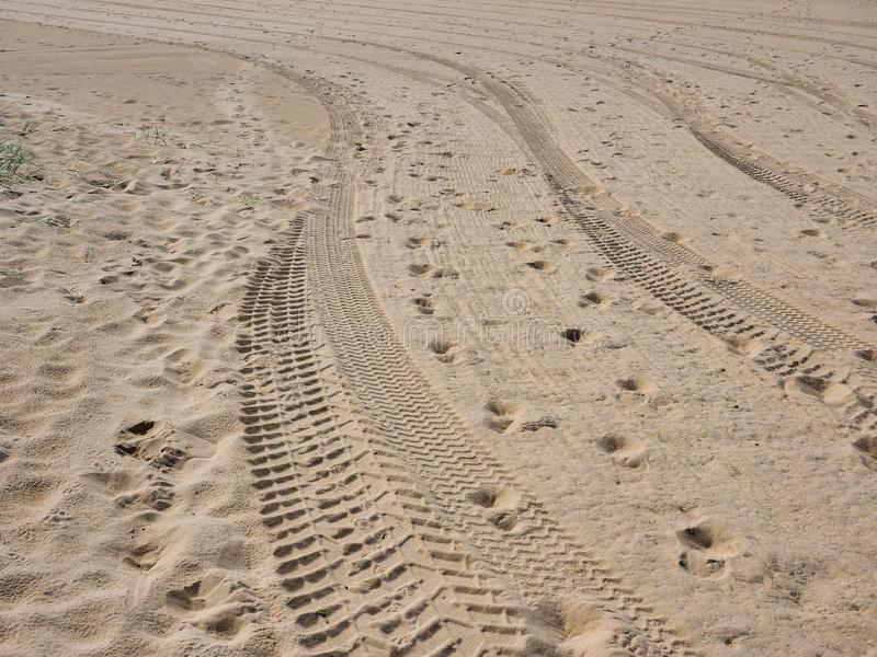 Fresh Tire Tracks and Footprints on Yellow Sand Beach royalty free stock photography