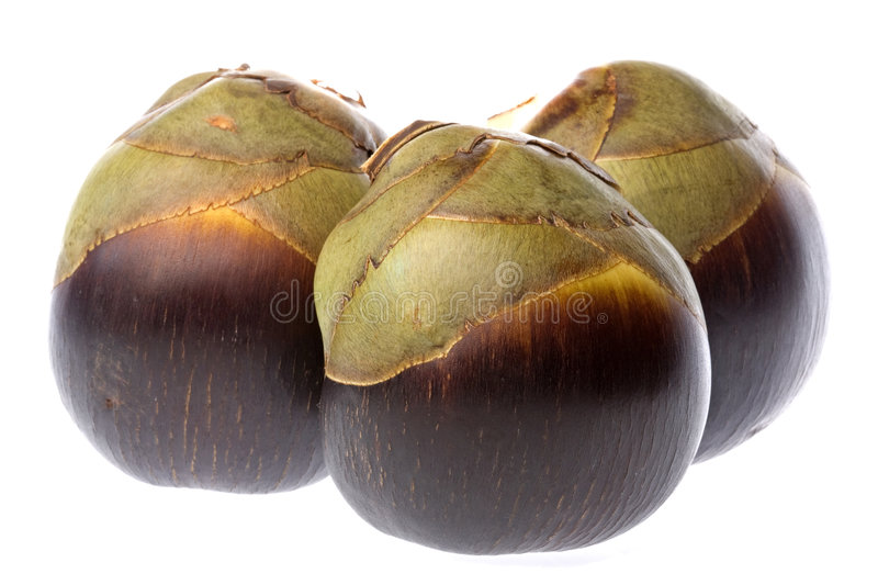 Download Fresh Toddy Palms Isolated stock image. Image of sugar - 7281119