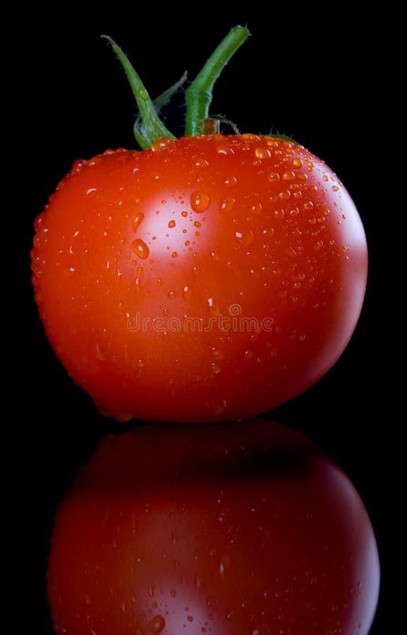 Download Fresh Tomato Stock Photos - Image: 10116173