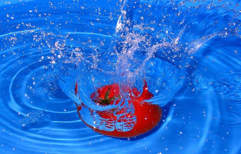 Download Fresh tomato stock photo. Image of tomato, vegetables, fresh - 169784