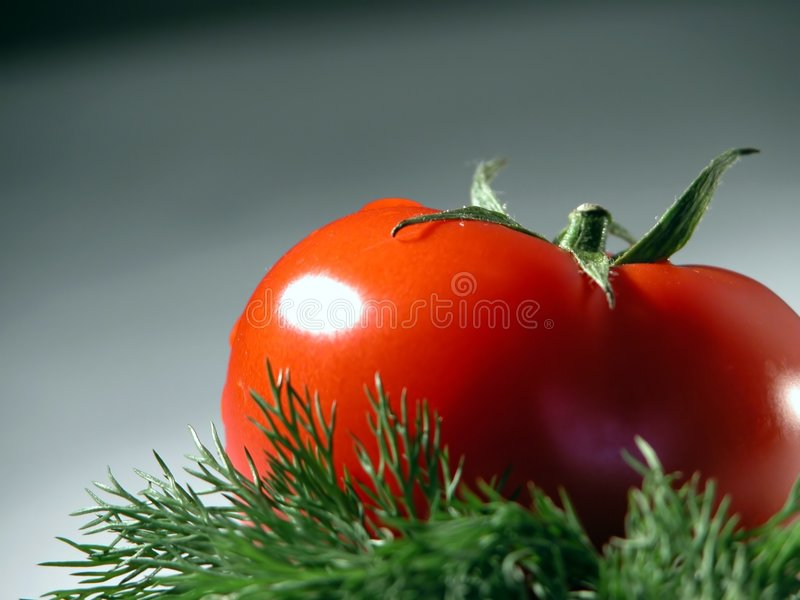 Fresh tomato and dill stock photography