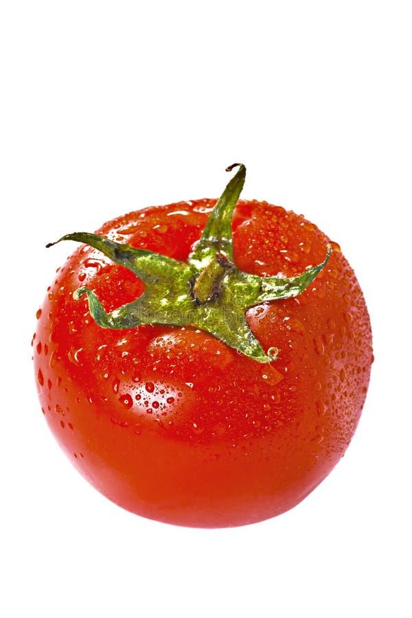 Fresh Tomato Over White Stock Image