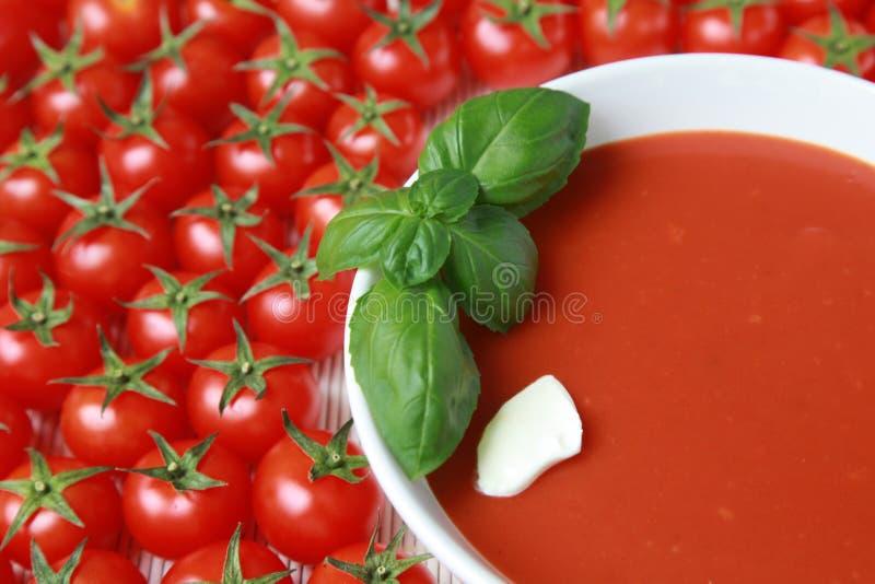 Fresh tomato soup stock image