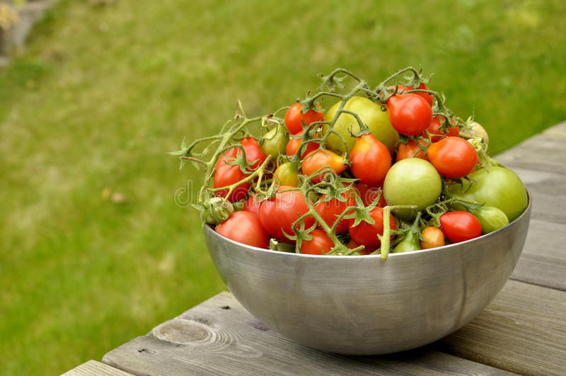 Download Fresh Tomatoes stock image. Image of harvest, ingredient - 16327949