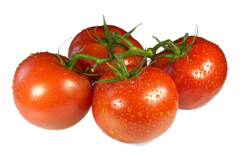 Fresh tomatoes royalty free stock photos