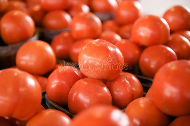 Download Fresh Tomatoes stock photo. Image of food, gardening, diet - 4360882