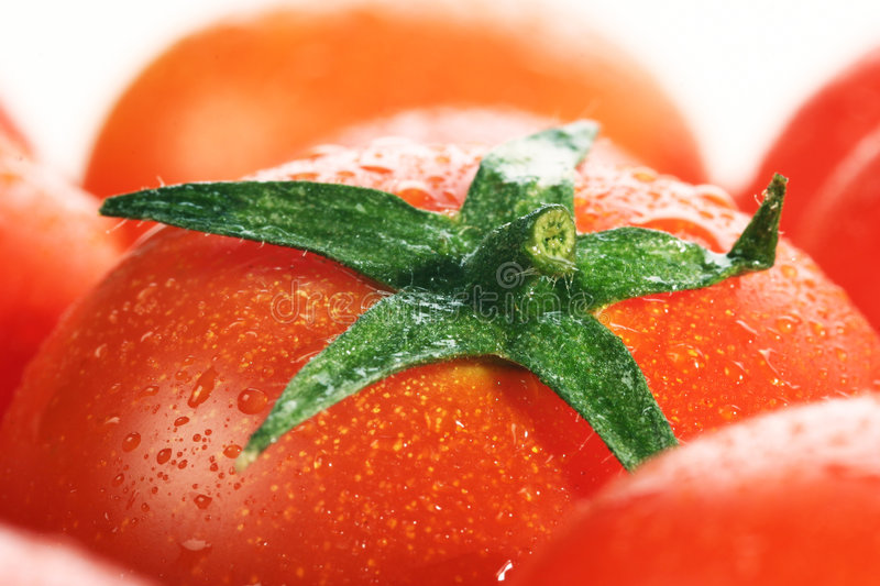 Download Fresh tomatoes stock photo. Image of meal, ripe, consume - 503150