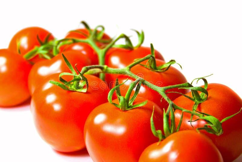Download Fresh tomatoes stock image. Image of image, ripe, stem - 7108423