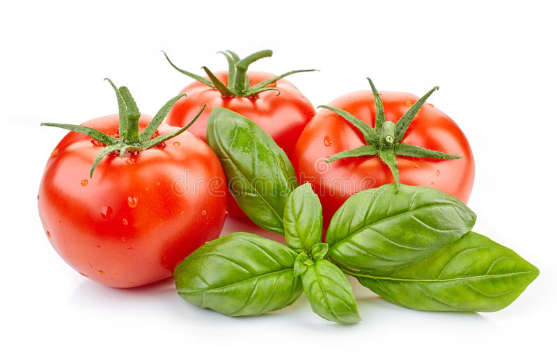 Fresh tomatoes and basil leaf stock photos