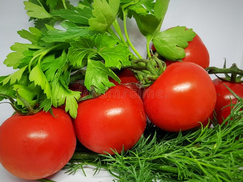 fresh tomatoes on a branch surrounded by greenery stock image