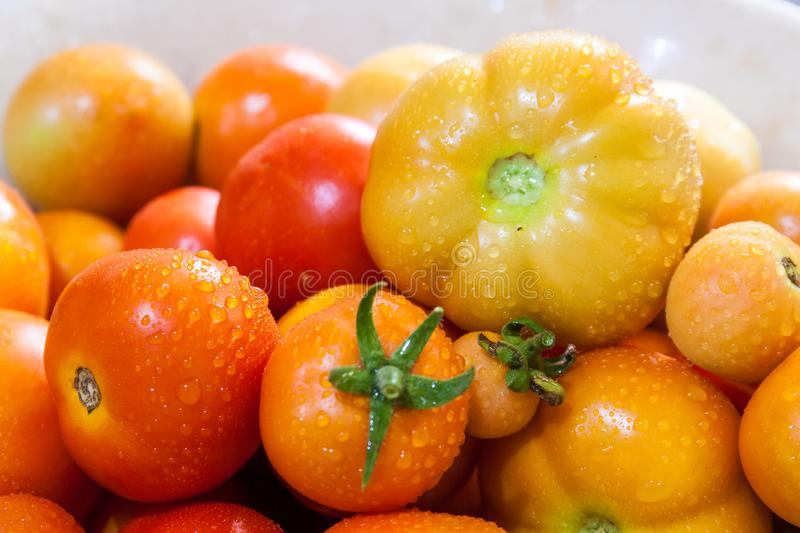 Close up of tomatoes in a bowl. Fresh tomatoes with different sizes in a bowl, with water droplets on it royalty free stock image
