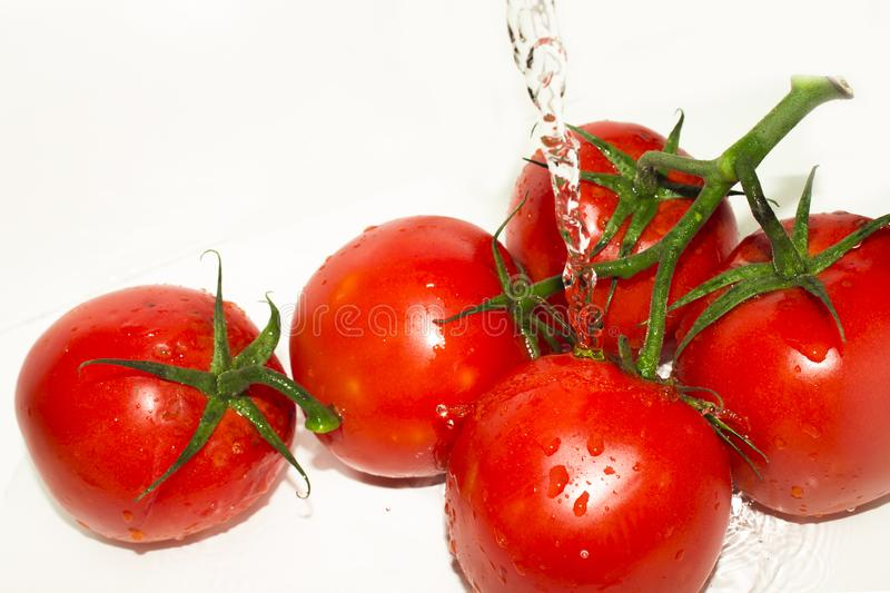 Fresh tomatoes falling in water stock images