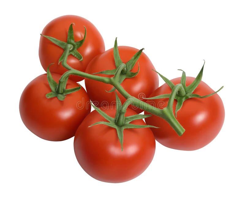 Fresh tomatoes isolated on white stock image