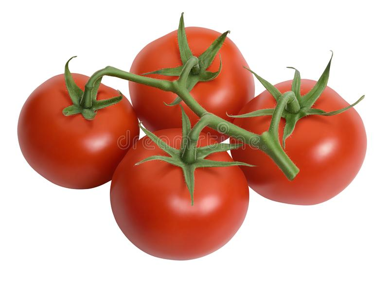 Fresh tomatoes isolated on white stock photography