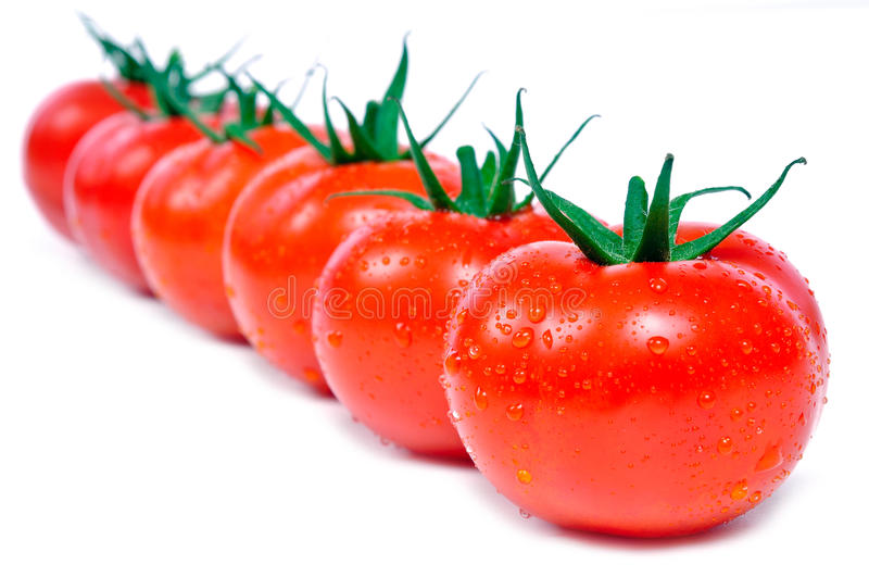 Fresh tomatoes in a row. With wter drops royalty free stock photo