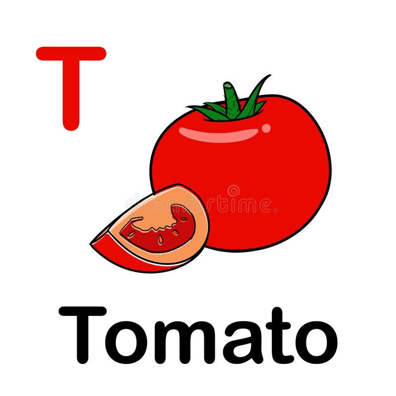 Fresh tomatoes with spelling word. Illustration of fresh tomatoes with spelling word vector illustration
