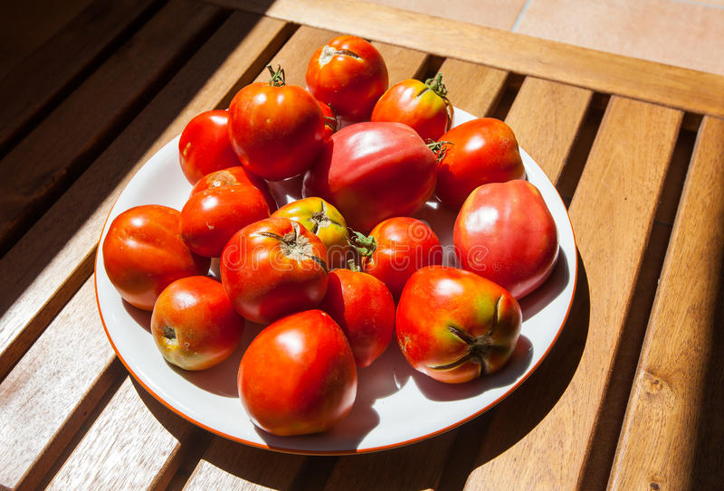 Fresh tomatoes in the sun, Spain stock image