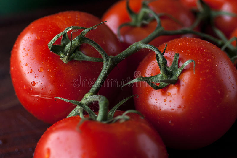 Fresh Tomatoes. Fresh, very red tomatoes still attached on the branch. With water drops. Very nicely lit stock images