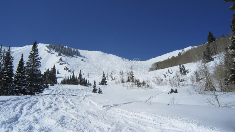 Fresh Tracks in Utah. Looking up where not too many people have been at royalty free stock photos