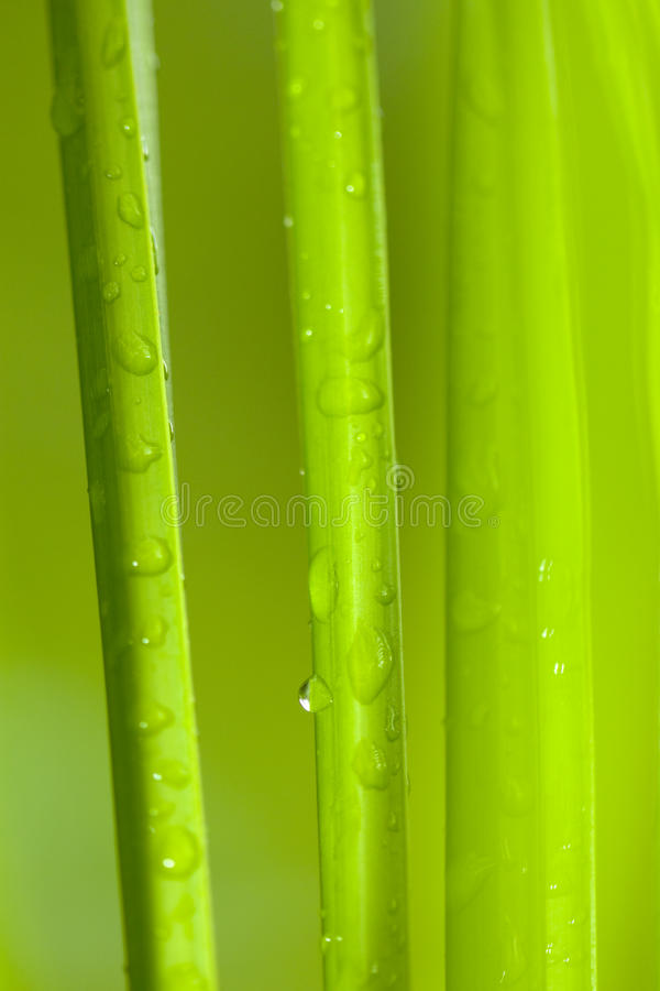 Fresh tropical background royalty free stock images
