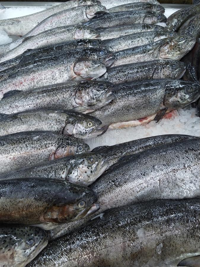 Fresh Trout fish on ice crush shelf. Close-up stock photos