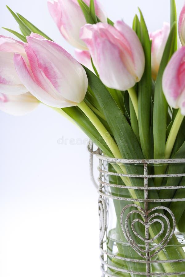 Fresh tulips royalty free stock photo