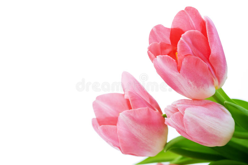 Download Fresh tulips stock image. Image of gift, bouquet, flora - 18208297