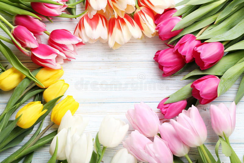 Fresh tulips royalty free stock photography