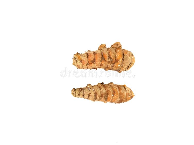 Fresh Turmeric isolated on white background. Use for graphic design needs royalty free stock photos