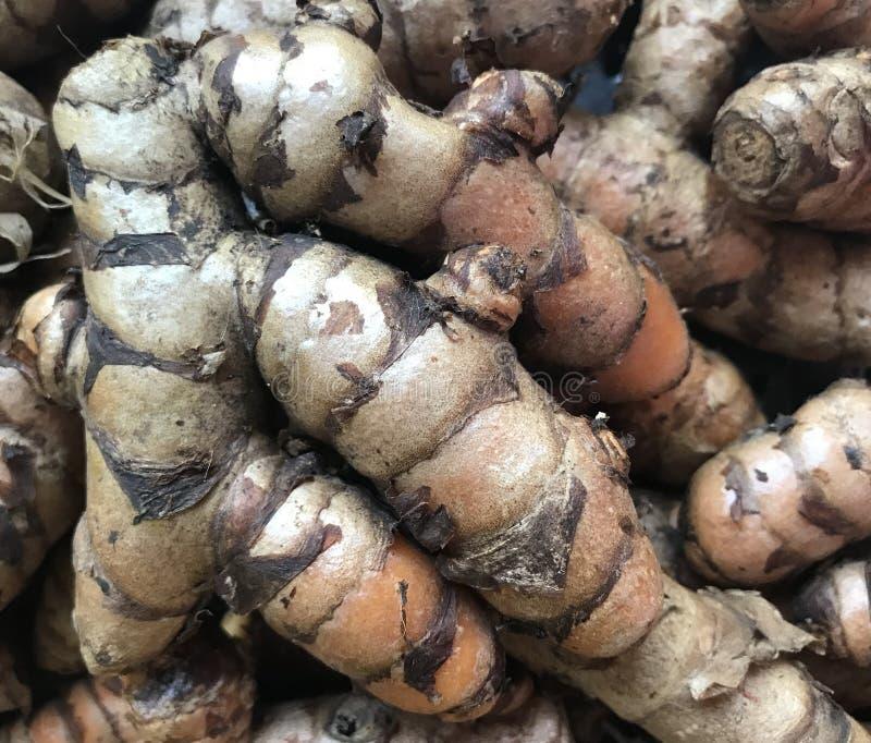 Fresh Turmeric Root stock photos